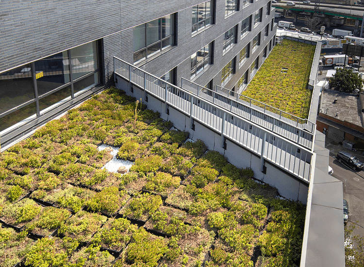 MLK Plaza green roof
